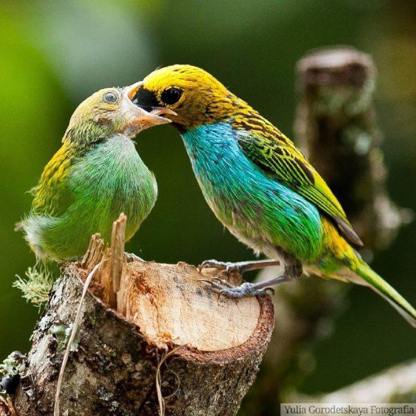 Критическое мышление. Птицы. Еда.